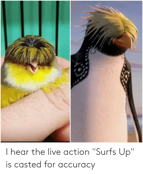 """Casted: I hear the live action """"Surfs Up"""" is casted for accuracy"""
