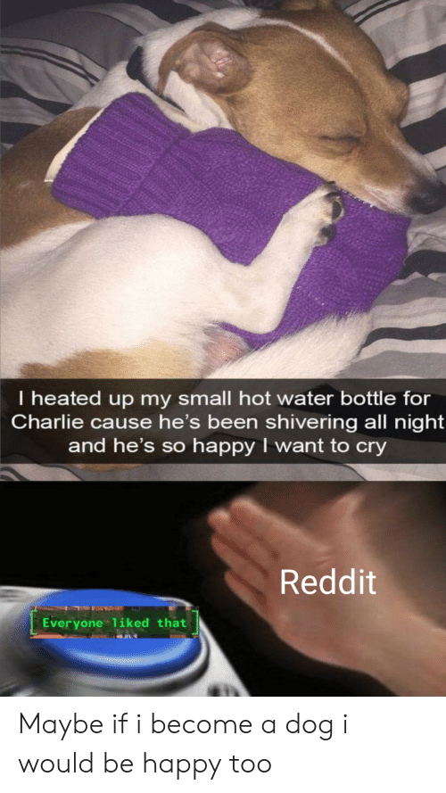 Charlie, Reddit, and Happy: I heated up my small hot water bottle for  Charlie cause he's been shivering all night  and he's so happy I want to cry  Reddit  Everyone liked that Maybe if i become a dog i would be happy too