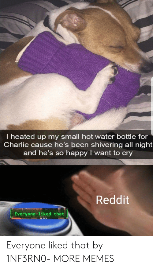 Charlie, Dank, and Memes: I heated up my small hot water bottle for  Charlie cause he's been shivering all night  and he's so happy I want to cry  Reddit  Everyone 1iked that Everyone liked that by 1NF3RN0- MORE MEMES