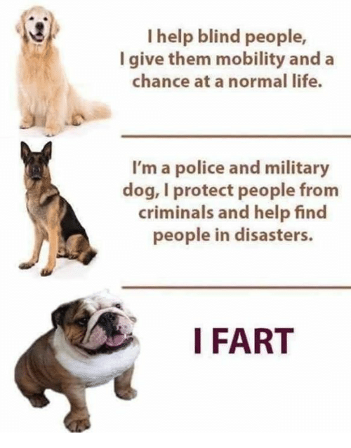 Life, Memes, and Police: I help blind people,  I give them mobility and a  chance at a normal life.  I'm a police and military  dog, I protect people from  criminals and help find  people in disasters.  I FART