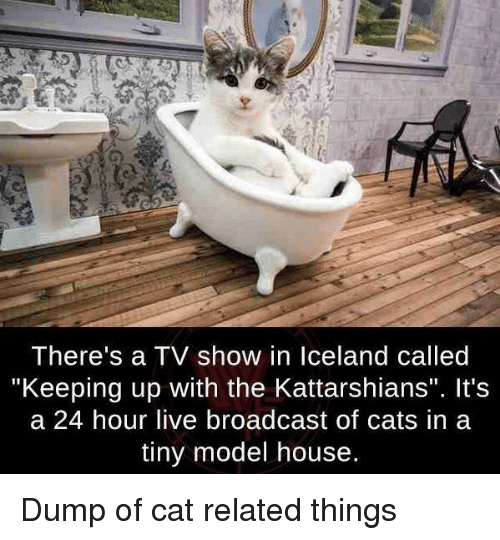 "A 24: I here's a IV show in lceland called  ""Keeping up with the Kattarshians"". It's  a 24 hour live broadcast of cats in a  tiny model house. Dump of cat related things"