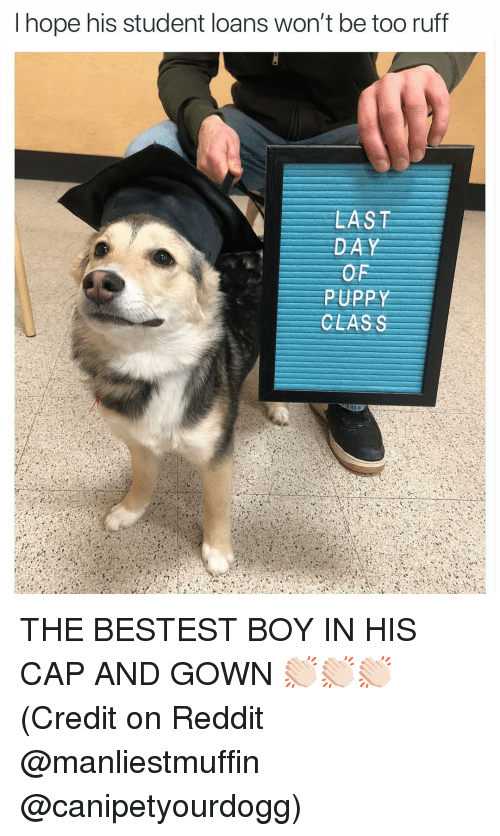 Funny, Reddit, and Loans: I hope his student loans won't be too ruff  LAST  DAY  OF  PUPPY  CLASS THE BESTEST BOY IN HIS CAP AND GOWN 👏🏻👏🏻👏🏻 (Credit on Reddit @manliestmuffin @canipetyourdogg)