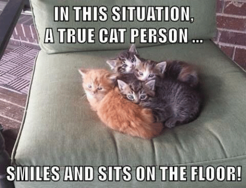Memes, Smiles, and 🤖: I  ,  IN THIS SITUATION  ATRUE CAT PERSON  SMILES AND SITS ON THE FLOOR!