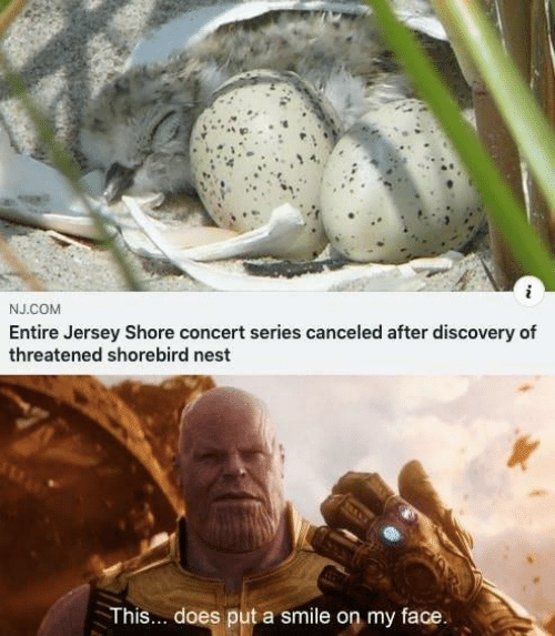 Nest: i  J.COM  Entire Jersey Shore concert series canceled after discovery of  threatened shorebird nest  This.. does put a smile on my face.