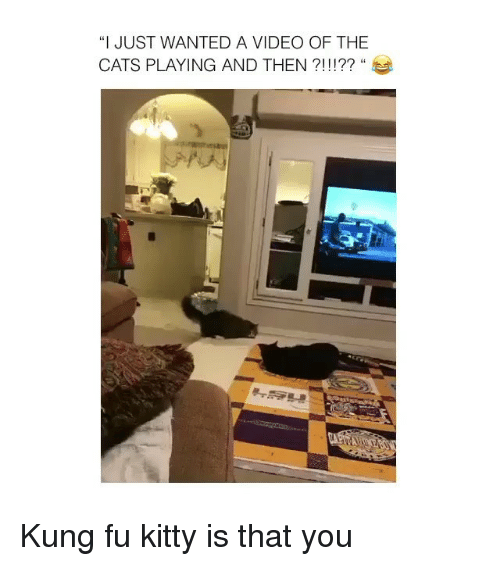 """Kungs: """"I JUST WANTED A VIDEO OF THE  CATS PLAYING AND THEN ?!!!?? """" Kung fu kitty is that you"""