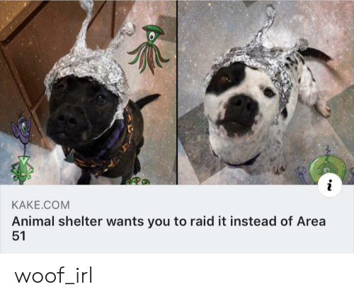 Animal, Animal Shelter, and Irl: i  KAKE.COM  Animal shelter wants you to raid it instead of Area  51 woof_irl