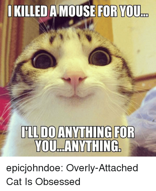 Tumblr, Blog, and Mouse: I  KILLED A MOUSE FOR YOU  .  YOU ANYTHING epicjohndoe:  Overly-Attached Cat Is Obsessed