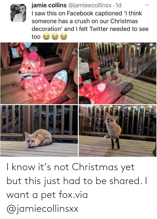 Shared: I know it's not Christmas yet but this just had to be shared. I want a pet fox.via @jamiecollinsxx