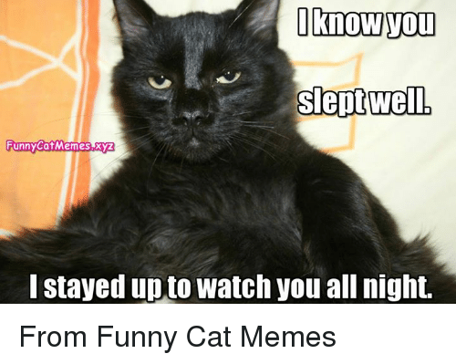 25 best memes about funny cats meme funny cats memes