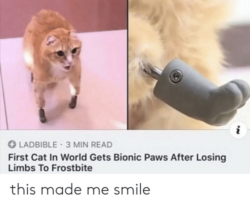 Paws: i  LADBIBLE 3 MIN READ  First Cat In World Gets Bionic Paws After Losing  Limbs To Frostbite this made me smile