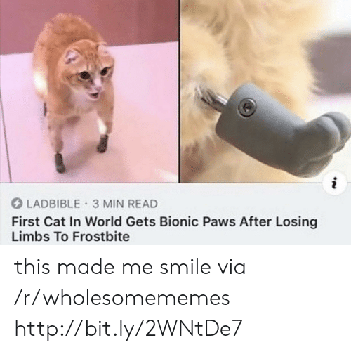Paws: i  LADBIBLE 3 MIN READ  First Cat In World Gets Bionic Paws After Losing  Limbs To Frostbite this made me smile via /r/wholesomememes http://bit.ly/2WNtDe7