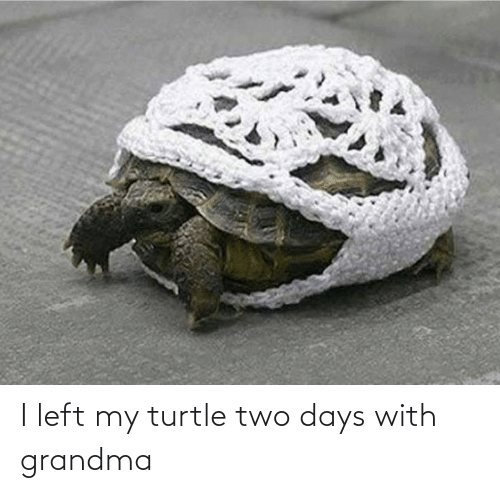 Turtle: I left my turtle two days with grandma