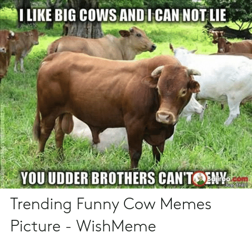 Wishmeme: I LIKE BIG COWS ANDI CAN NOT LIE  YOU UDDER BROTHERS CAN'TOENY  jiroo  Just Chill! Trending Funny Cow Memes Picture - WishMeme