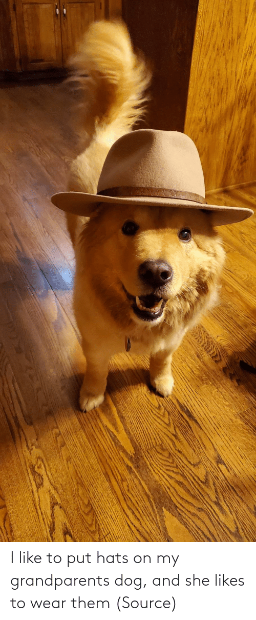 them: I like to put hats on my grandparents dog, and she likes to wear them (Source)