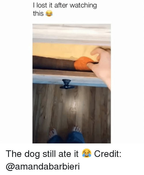 Memes, Lost, and 🤖: I lost it after watching  this The dog still ate it 😂 Credit: @amandabarbieri
