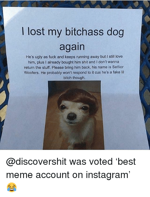 Bitch, Fake, and Funny: I lost my bitchass dog  again  He's ugly as fuck and keeps running away but I still love  him, plus I already bought him shit and I don't wanna  return the stuff. Please bring him back, his name is Señior  Woofers. He probably won't respond to it cus he's a fake lil  bitch though. @discovershit was voted 'best meme account on instagram' 😂