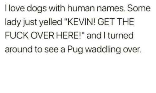 "Dogs, Love, and Fuck: I love dogs with human names. Some  lady just yelled ""KEVIN! GET THE  FUCK OVER HERE!"" and I turned  around to see a Pug waddling over."