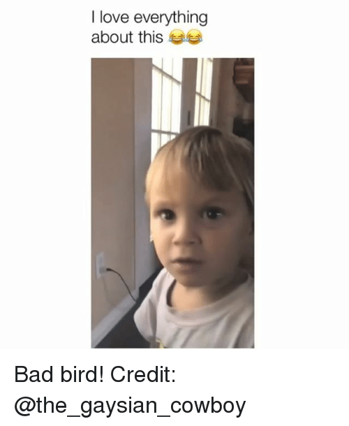 Bad, Love, and Memes: I love everything  about this Bad bird! Credit: @the_gaysian_cowboy