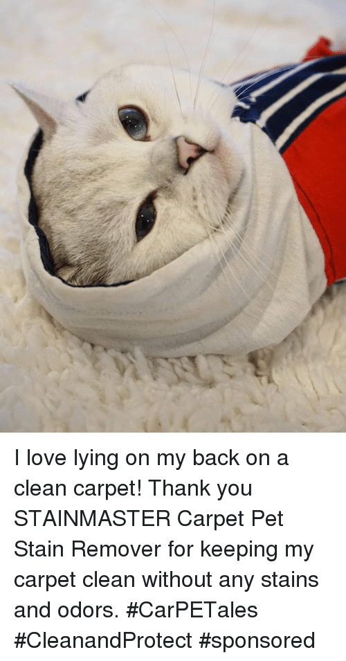Staine: I love lying on my back on a clean carpet! Thank you STAINMASTER Carpet Pet Stain Remover for keeping my carpet clean without any stains and odors. #CarPETales #CleanandProtect #sponsored