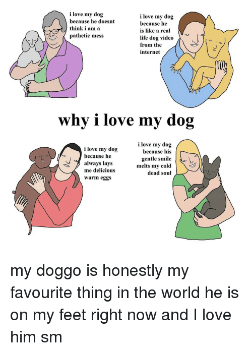 Memes, 🤖, and Doggo: i love my dog  i love my dog  because he doesnt  because he  think i am a  is like a real  pathetic mess  life dog video  from the  internet  why i love my dog  i love my dog  i love my dog  because his  because he  gentle smile  do  always lays  melts my cold  me delicious  dead soul  warm eggs my doggo is honestly my favourite thing in the world he is on my feet right now and I love him sm