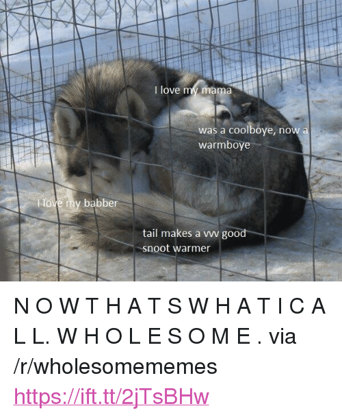 """Love, Good, and Mama: I love my mama  was a coolboye, now  warmboye  tail makes a vww good  snoot warmer <p>N O W T H A T S W H A T I C A L L. W H O L E S O M E . via /r/wholesomememes <a href=""""https://ift.tt/2jTsBHw"""">https://ift.tt/2jTsBHw</a></p>"""