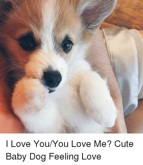 Cute, Funny, and Love