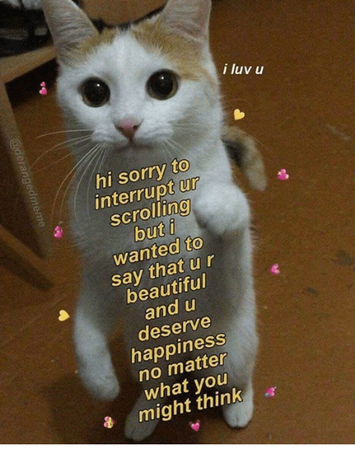 Beautiful, Memes, and Sorry: i luv u  hi sorry to  interrupt ur  scrolling  but i  wanted to  say that ur  beautiful  and u  deserve  happiness  no matter  what you  a might think