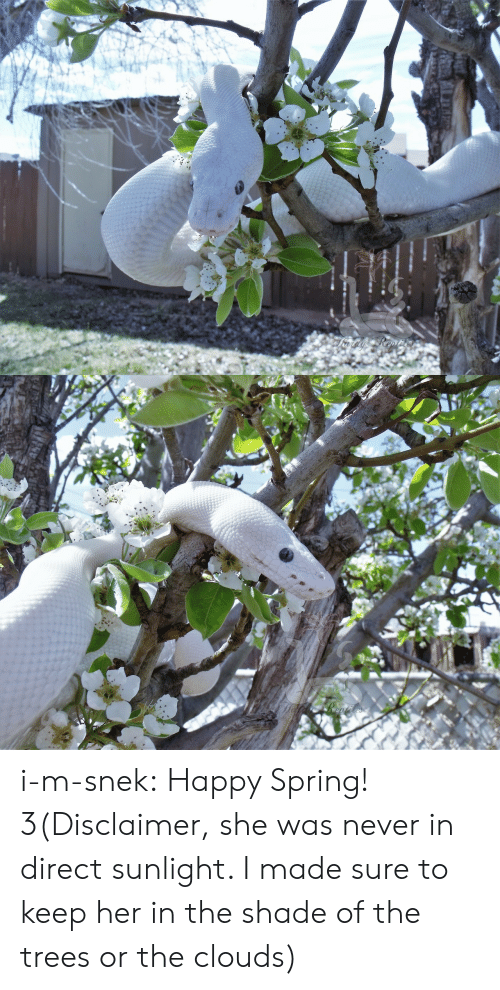 Shade, Tumblr, and Blog: i-m-snek: Happy Spring! 3(Disclaimer, she was never in direct sunlight. I made sure to keep her in the shade of the trees or the clouds)