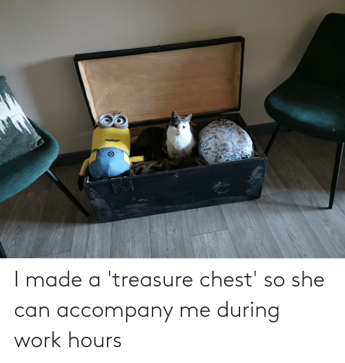 Aww Memes: I made a 'treasure chest' so she can accompany me during work hours