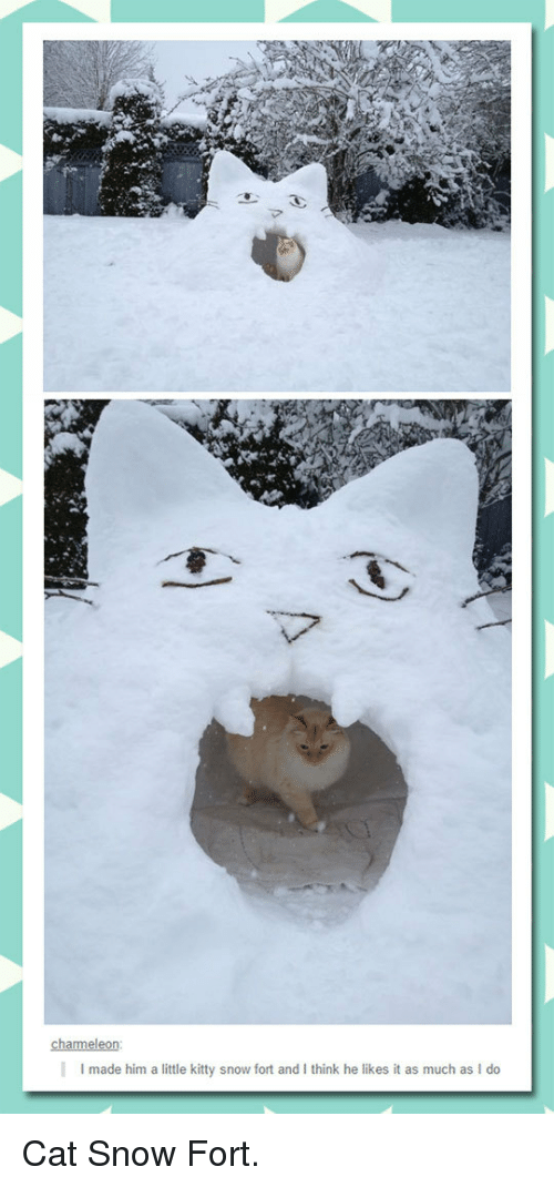 He Likes It: I made him a little kitty snow fort and I think he likes it as much as I do <p>Cat Snow Fort.</p>