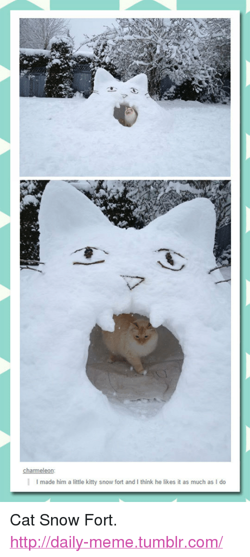 """He Likes It: I made him a little kitty snow fort and I think he likes it as much as I do <p>Cat Snow Fort.<br/><a href=""""http://daily-meme.tumblr.com""""><span style=""""color: #0000cd;""""><a href=""""http://daily-meme.tumblr.com/"""">http://daily-meme.tumblr.com/</a></span></a></p>"""