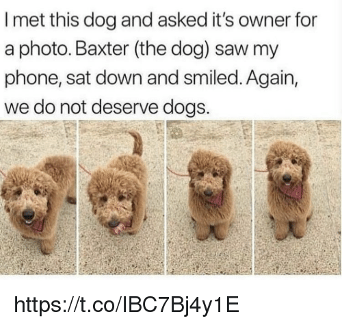 Dogs, Memes, and Phone: I met this dog and asked it's owner for  a photo. Baxter (the dog) saw my  phone, sat down and smiled. Again,  we do not deserve dogs. https://t.co/IBC7Bj4y1E