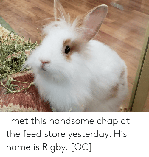 Name, Yesterday, and Store: I met this handsome chap at the feed store yesterday. His name is Rigby. [OC]