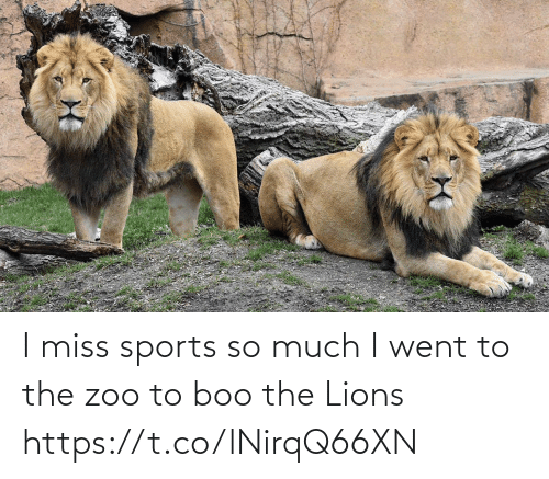 Lions: I miss sports so much I went to the zoo to boo the Lions https://t.co/lNirqQ66XN