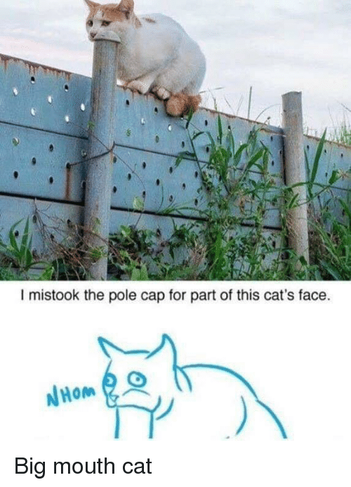 Cats, Cat, and Big: I mistook the pole cap for part of this cat's face.  Hom  リ Big mouth cat