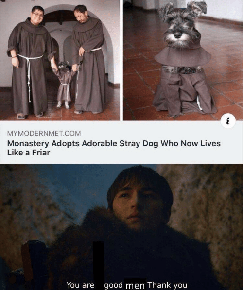Thank You, Good, and Adorable: i  MYMODERNMET.COM  Monastery Adopts Adorable Stray Dog Who Now Lives  Like a Friar  You are  good men Thank you