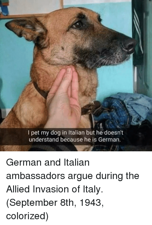 Arguing, Italy, and Dog: I pet my dog in Italian but he doesn't  understand because he is German German and Italian ambassadors argue during the Allied Invasion of Italy. (September 8th, 1943, colorized)