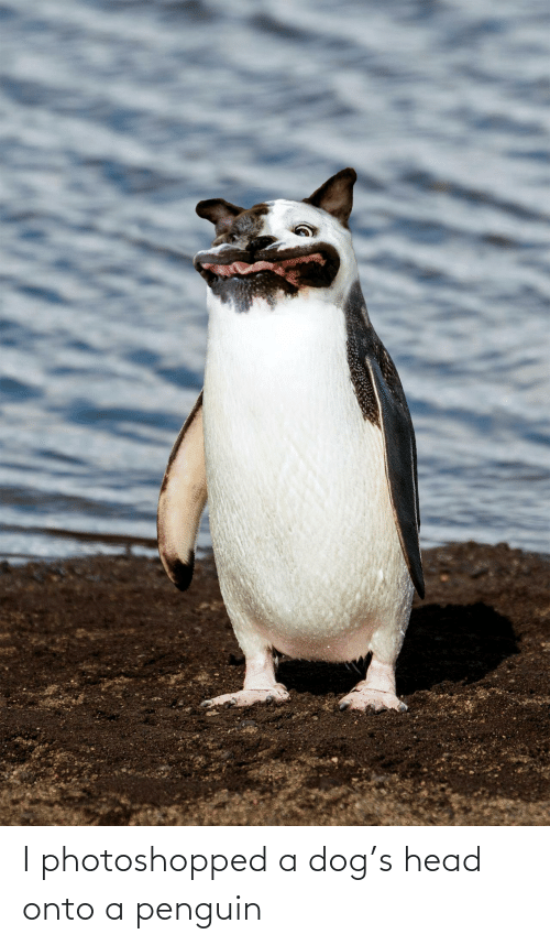 Penguin: I photoshopped a dog's head onto a penguin