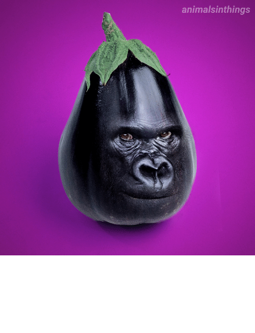 eggplant: I photoshopped a Gorilla into an Eggplant for your viewing pleasure.