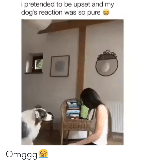 Dogs, Pure, and Upset: i pretended to be upset and my  dog's reaction was so pure Omggg😭