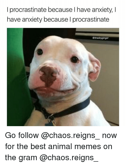 Animals Meme: I procrastinate because have anxiety, I  have anxiety because I procrastinate  @thedryginger Go follow @chaos.reigns_ now for the best animal memes on the gram @chaos.reigns_