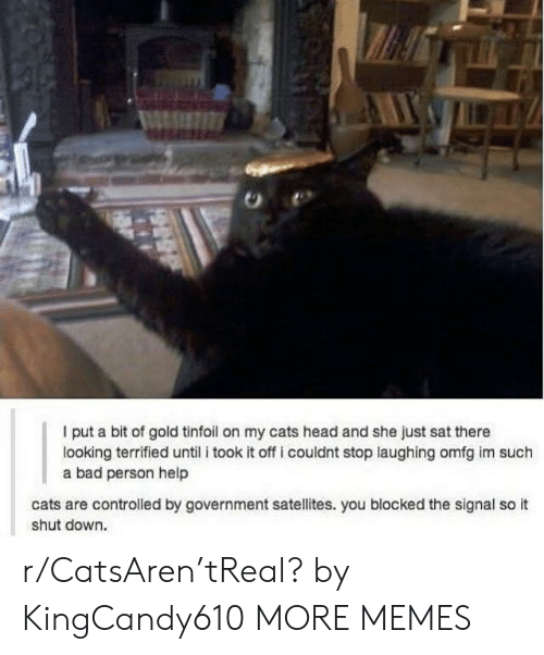 Cats Are: I put a bit of gold tinfoil on my cats head and she just sat there  looking terrified until i took it off i couldnt stop laughing omfg im such  a bad person help  cats are controlled by government satellites. you blocked the signal so it  shut down. r/CatsAren'tReal? by KingCandy610 MORE MEMES