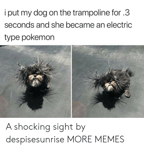 Sights: i put my dog on the trampoline for.3  seconds and she became an electric  type pokemon A shocking sight by despisesunrise MORE MEMES