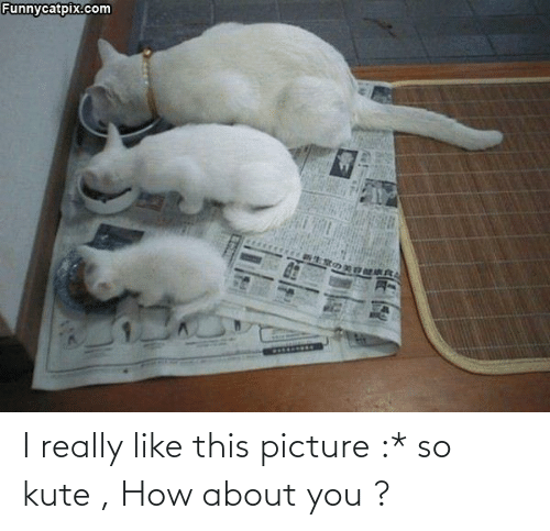 Aww Memes: I really like this picture :* so kute , How about you ?