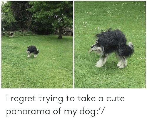 Cute, Regret, and Dog: I regret trying to take a cute panorama of my dog:'/