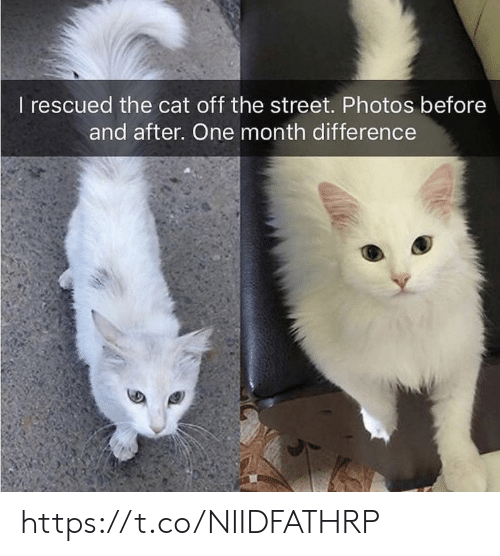 Memes, 🤖, and Cat: I rescued the cat off the street. Photos before  and after. One month difference https://t.co/NIIDFATHRP