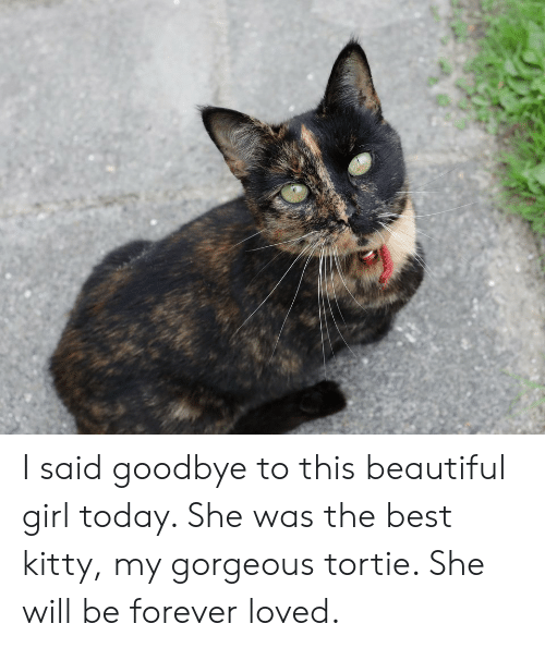 Beautiful, Best, and Forever: I said goodbye to this beautiful girl today. She was the best kitty, my gorgeous tortie. She will be forever loved.