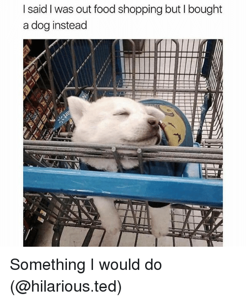Food, Funny, and Shopping: I said I was out food shopping but I bought  a dog instead Something I would do (@hilarious.ted)