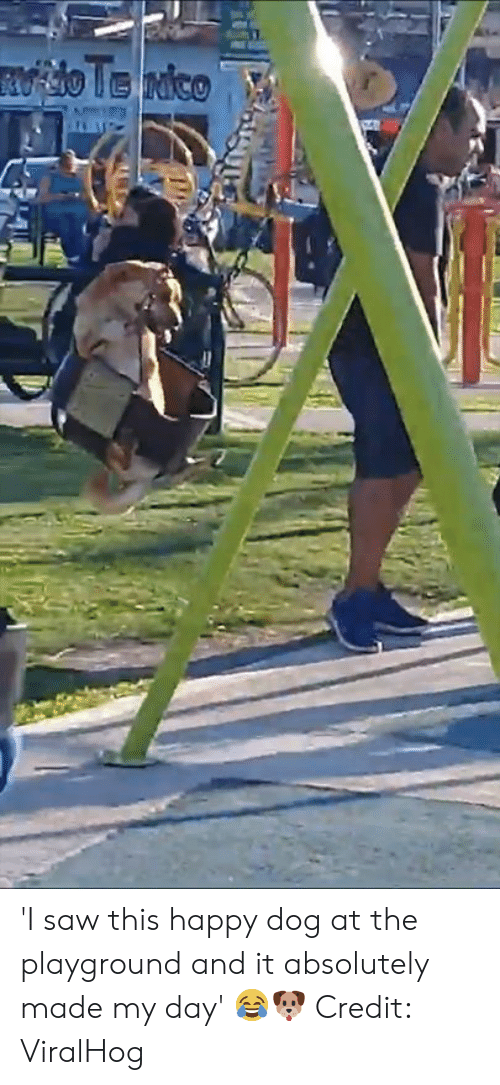Playground: 'I saw this happy dog at the playground and it absolutely made my day' 😂🐶  Credit: ViralHog