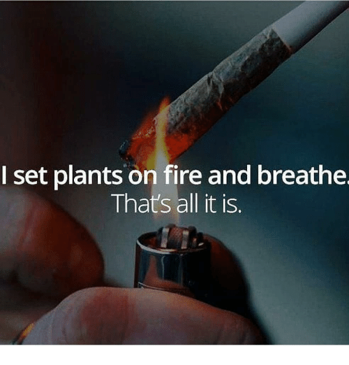 Fire, Memes, and 🤖: I set plants on fire and breathe  That's all it is